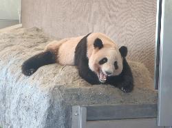 pandaok